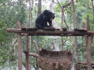 滝までの道中、熊の公園